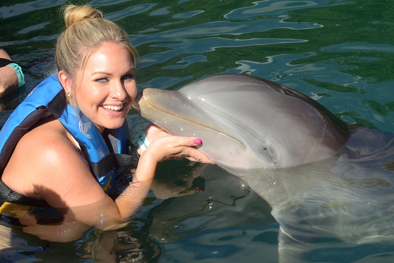 dolphin discovery tortola